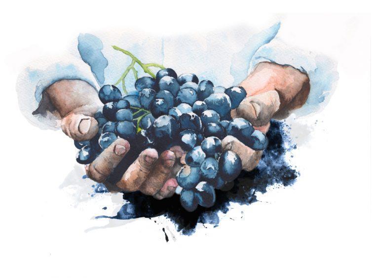 juliette-meffre-main-vigneron